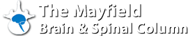 The Mayfield Brain & Spinal Column